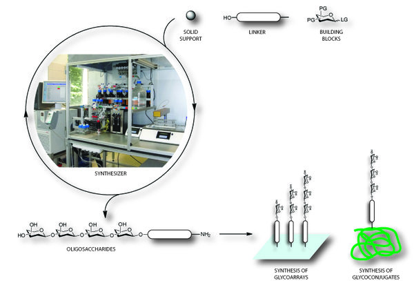 Automated Glycan Assembly