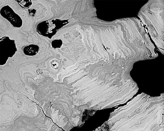 The complex patterns of mineral density variation in tesserae provide clues to growth mechanisms and mechanics. (Backscatter electron image)