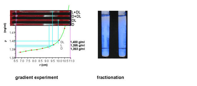 Fig. 3: Separation of DL-alanin crystals from the pure enantiomer crystals by density gradient ultracentrifugation in a Nycodenz gradient. The left figure (upper) shows the bands in the ultracentrifuge tubes and the lower part shows the corresponding calibration curve which allows the determination of the sample density. The right figure shows the separation of L- resp. D-alanin (upper band at meniscus) from the denser racemate (lower band) with a Nycodenz solution with intermediate density