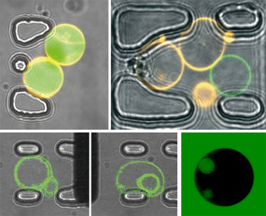 Micro-posts capturing different vesicle structures