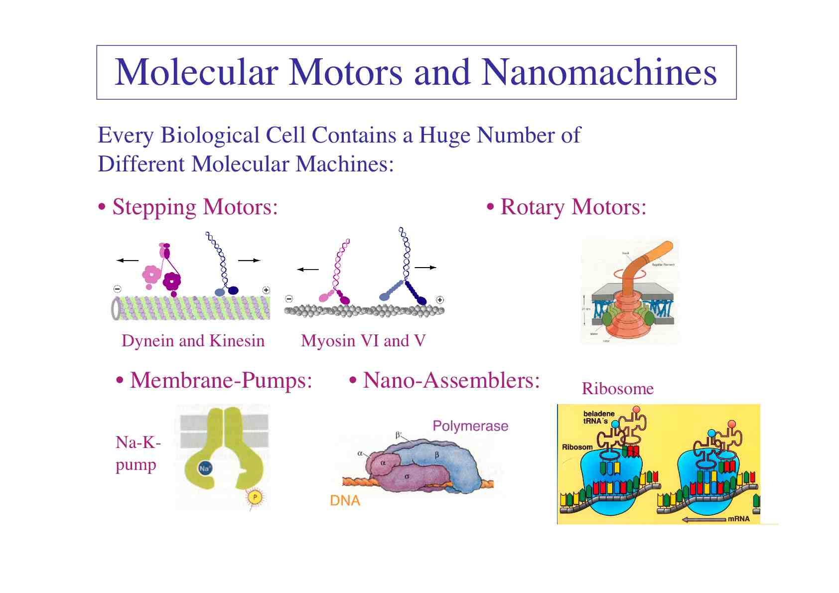 Different Types Of Molecular Motors And Nanomachines